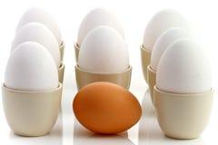 2棕色鸡鸡蛋怂恿一包围的白色 免版税库存照片