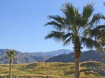 2棵挂接俯视的棕榈树 免版税库存图片