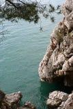 2棵杉木海运 库存图片