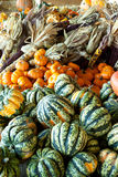 2棵秋天蔬菜 库存照片