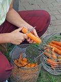 2棵红萝卜剥皮 免版税库存图片