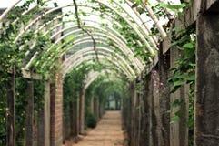 2棵走廊蔬菜 库存图片