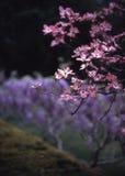 2植物的布鲁克林山茱萸庭院 免版税库存图片