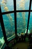 2水族馆 库存图片