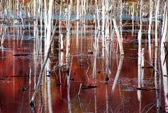 2沼泽 库存图片