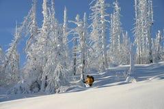 2滑雪的结构树 库存照片