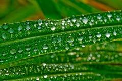 2滴草雨珠 库存照片