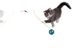 2演奏时间的逗人喜爱的小猫 免版税库存图片