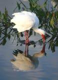 2热带的鸟 免版税库存照片