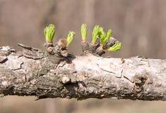 2片分行干燥绿色叶子 免版税库存照片