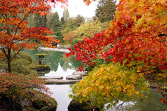 2片叶子槭树没有 免版税库存照片