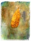 2片叶子绘画 库存图片