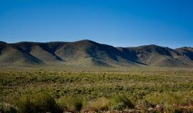 2片沙漠早期的春天 库存照片