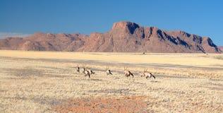 2片沙漠namib纳米比亚 免版税库存照片