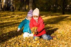 2片秋天收集叶子 库存图片