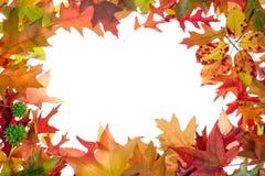 2片秋天框架叶子 免版税库存图片