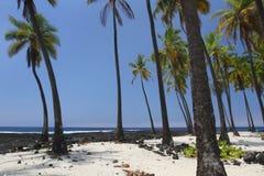 2片绿洲棕榈树 库存照片