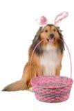 2狗复活节 库存照片
