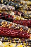 2玉米印地安人 免版税图库摄影