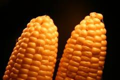 2玉米 免版税库存照片