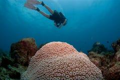 2珊瑚题头 库存图片