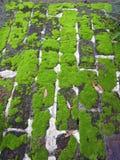 2生苔的砖 库存图片