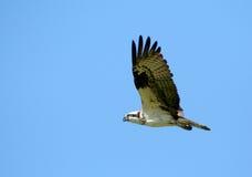 2白鹭的羽毛 免版税库存图片