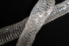 2皮肤蛇 免版税库存图片