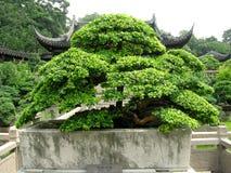 2盆景中国人房子 免版税图库摄影