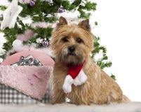 2石标老坐的狗年 免版税库存图片