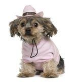 2穿戴了老狗岁月约克夏 免版税库存照片