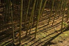 2竹严重的森林影子 免版税库存照片