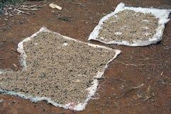 2粒豆咖啡干燥 免版税图库摄影
