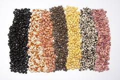 2粒豆地毯 免版税库存照片