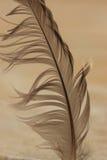 2羽毛 库存图片