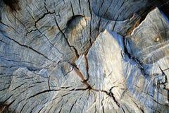 2老被锯的木头 免版税库存照片