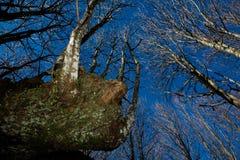 2英尺森林 免版税库存图片