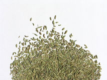 2茴香籽 免版税库存图片
