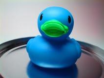 2蓝色鸭子胶 图库摄影