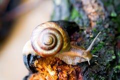 2蜗牛 免版税库存照片
