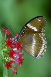 2蝴蝶 免版税库存图片