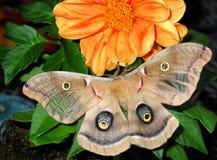 2蝴蝶 免版税图库摄影
