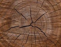 2被剪切的纹理结构树 图库摄影