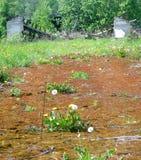 2被破坏的农业 库存图片