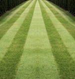 2镶边的草坪 库存照片