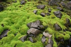 2非常绿色青苔 免版税库存图片