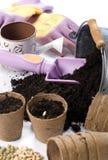 2颗种植的种子 免版税库存图片