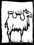 2骆驼 库存照片