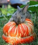 2骨髓兔子蔬菜 库存图片