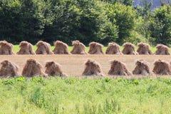 2麦地 库存照片